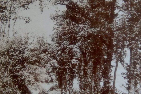 Lasington Lane 2